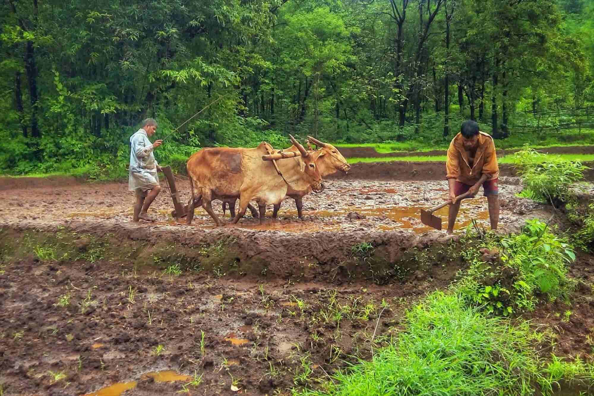 How Technology is Helping Farmers at the Grassroots