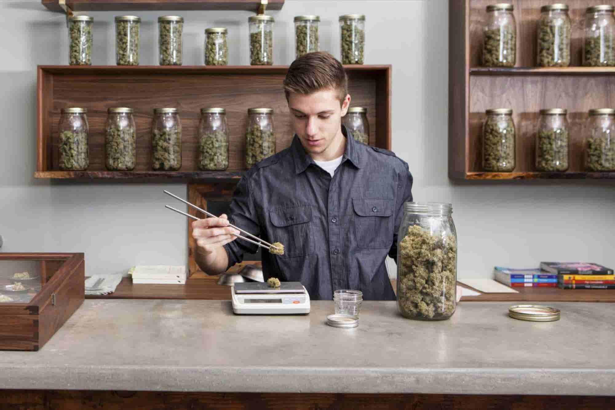 A University in Michigan Is Offering a Bachelor Degree for Marijuana Entrepreneurs