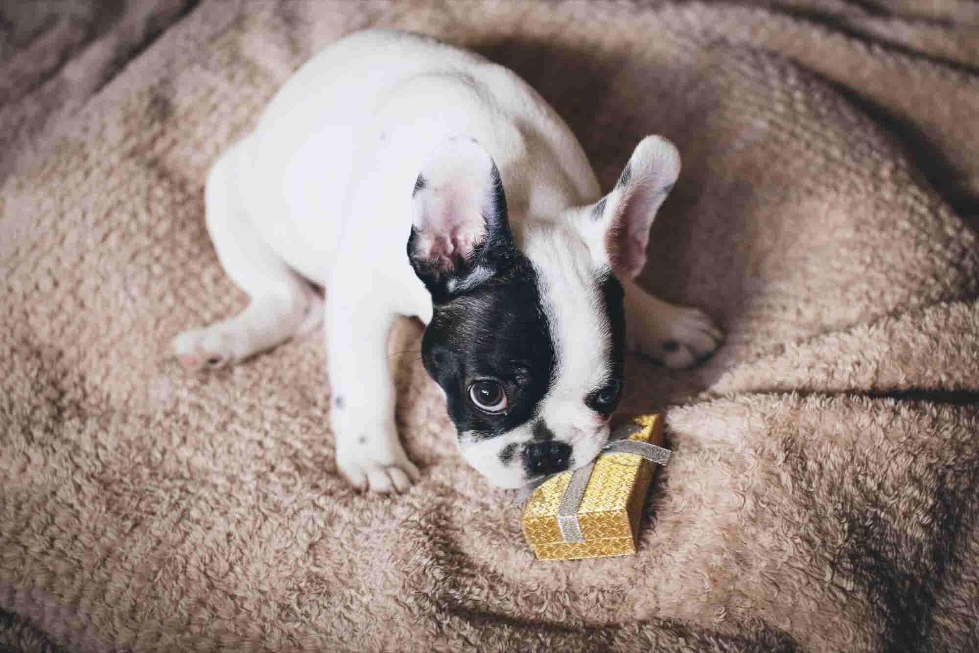 9 Gifts to Give the Dog-Loving Entrepreneurs In Your Life