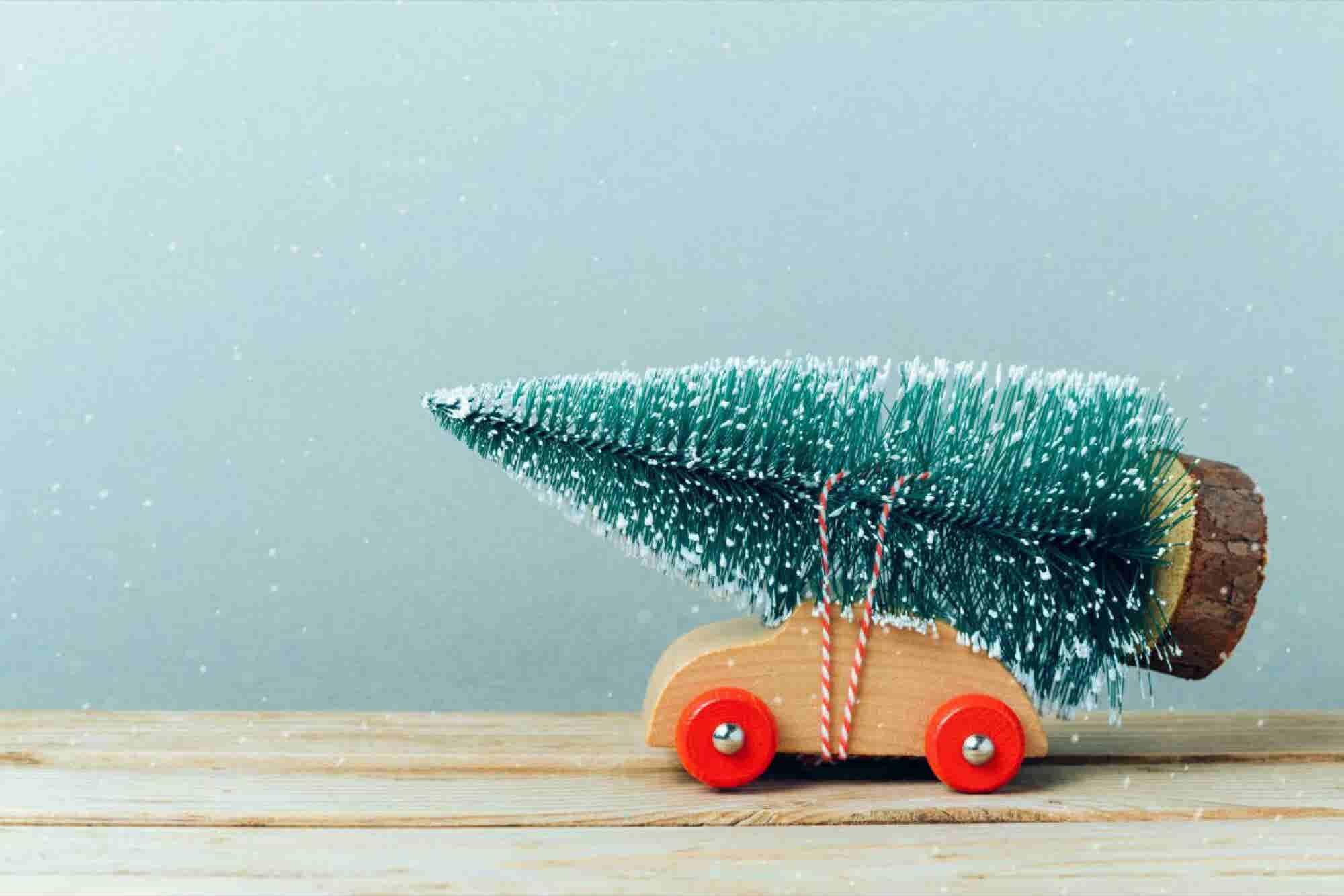 Prepara un negocio de reciclaje de árboles de Navidad