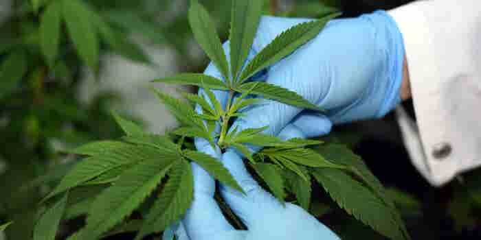 Researchers Recognize an International 'Tide Effect' Driving Worldwide Cannabis Reform