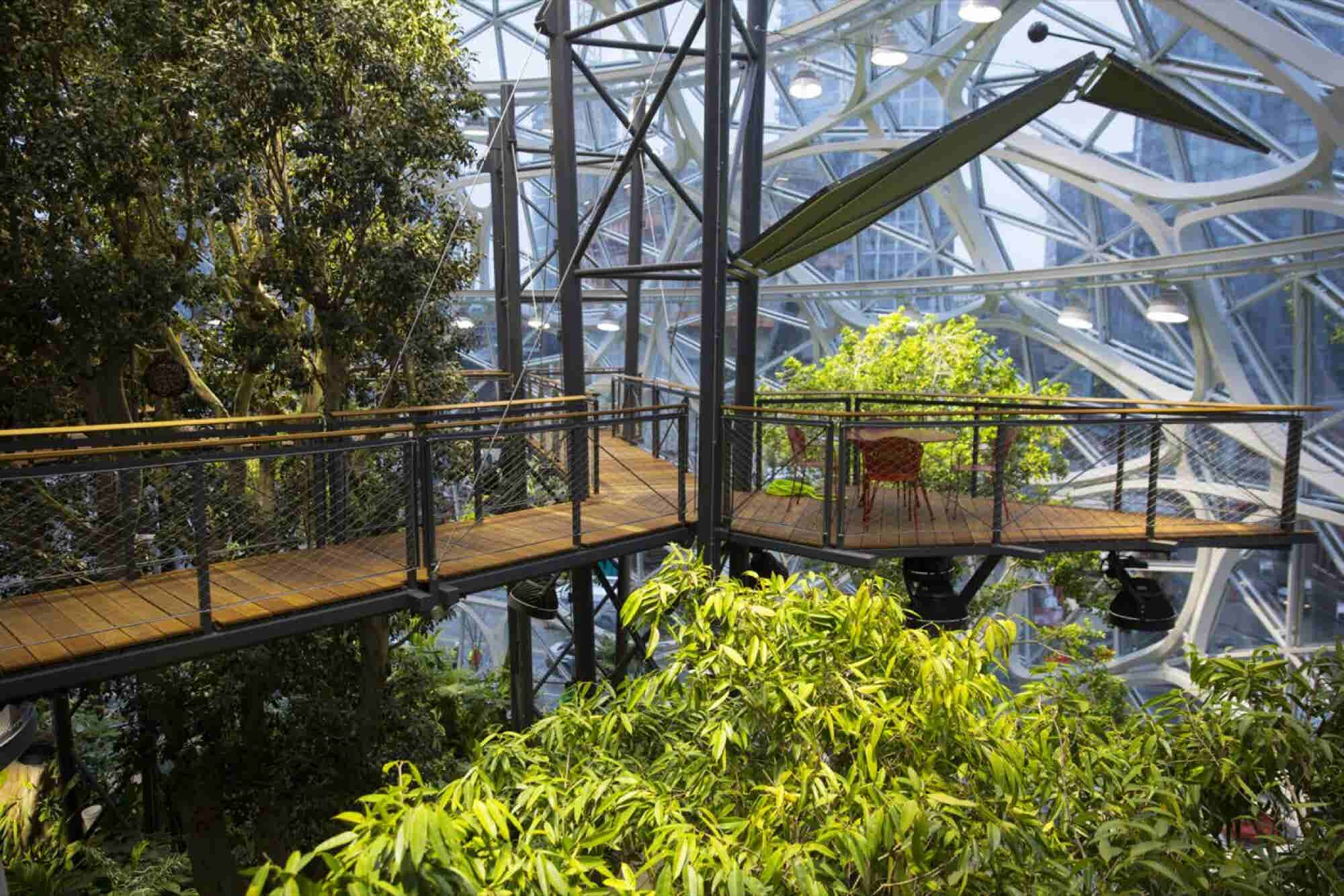 Take a Look Inside Amazon's New Rainforest Office Space