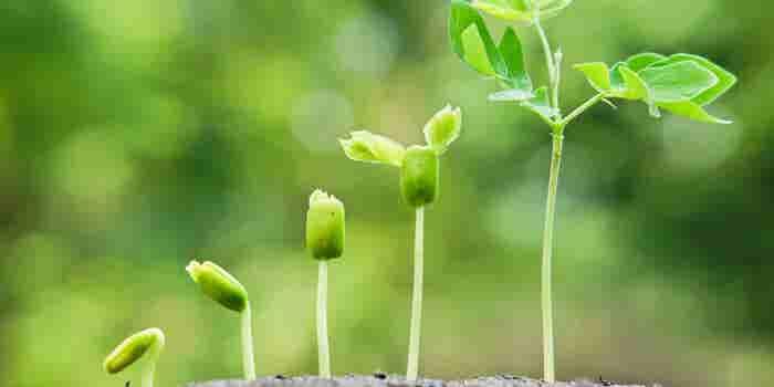 De startup a scaleup: 3 consejos para lograrlo