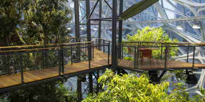 Echa un vistazo a las nuevas oficinas 'tropicales' de Amazon
