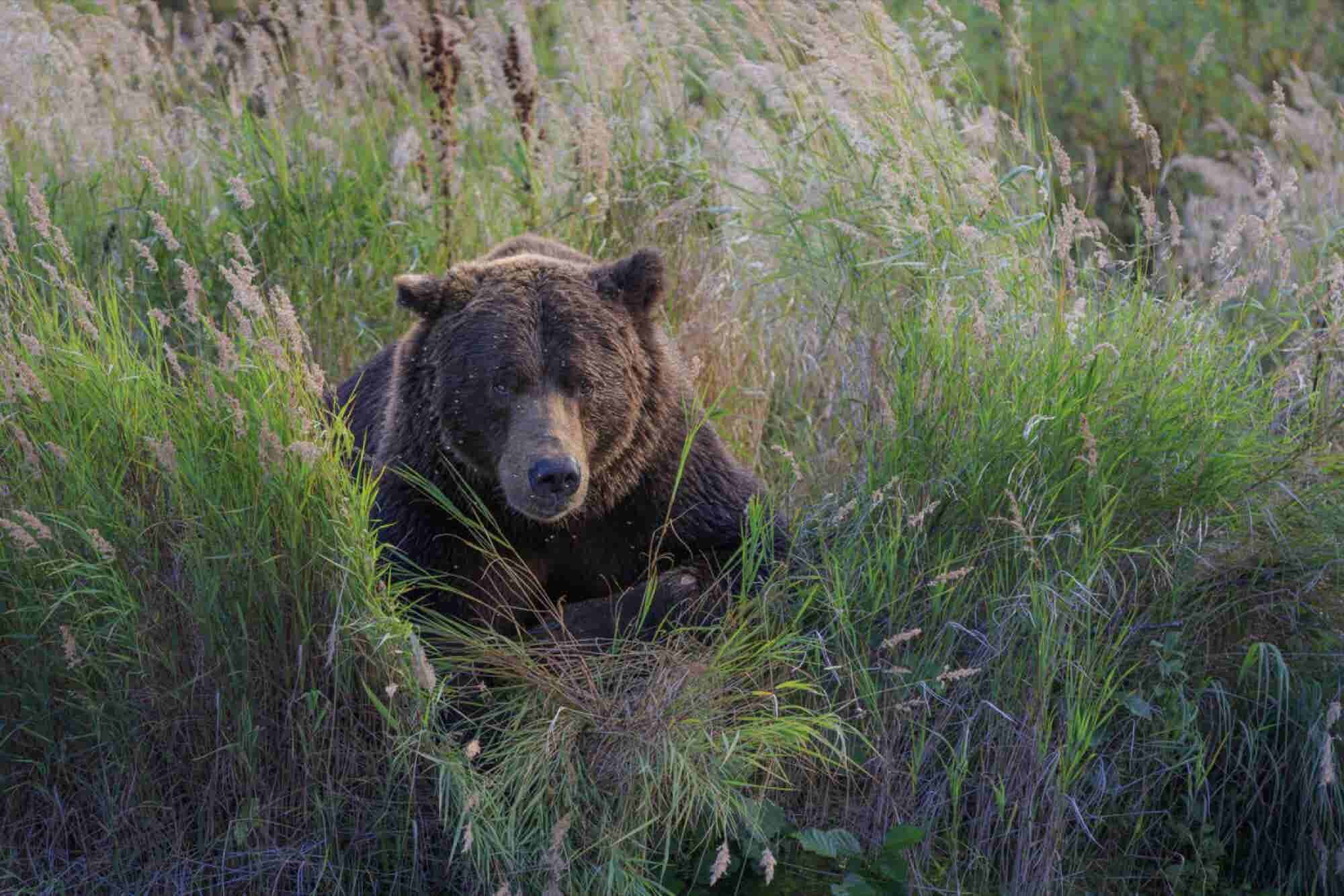 7 Sales Skills Learned Stalking and Photographing Wildlife