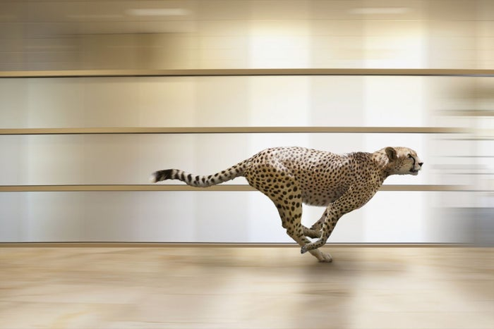 Increasing Your Website's Speed Could Save Your Business -- So, Here's How to Do It