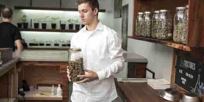 Cannabis Industry Likely to Employ More Than 400,000 By 2021, Study Projects