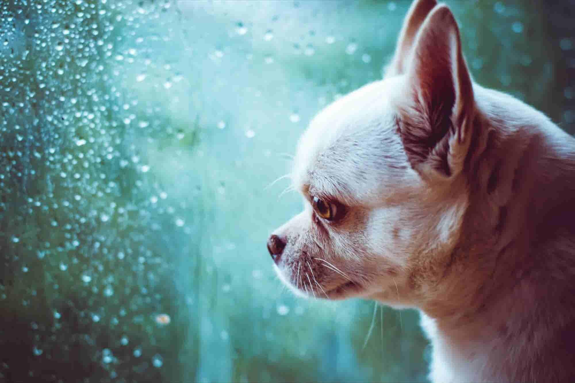 Esta startup te salva de la lluvia sorpresiva