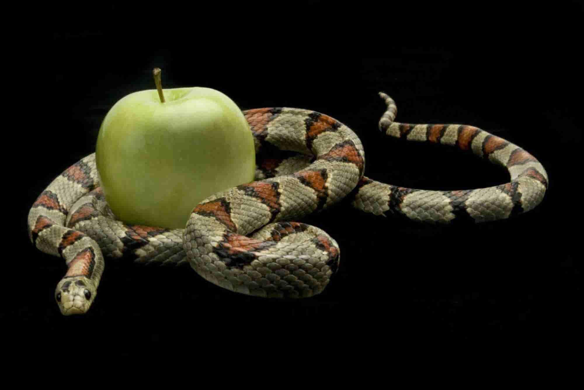 4 pecados del liderazgo que evitar