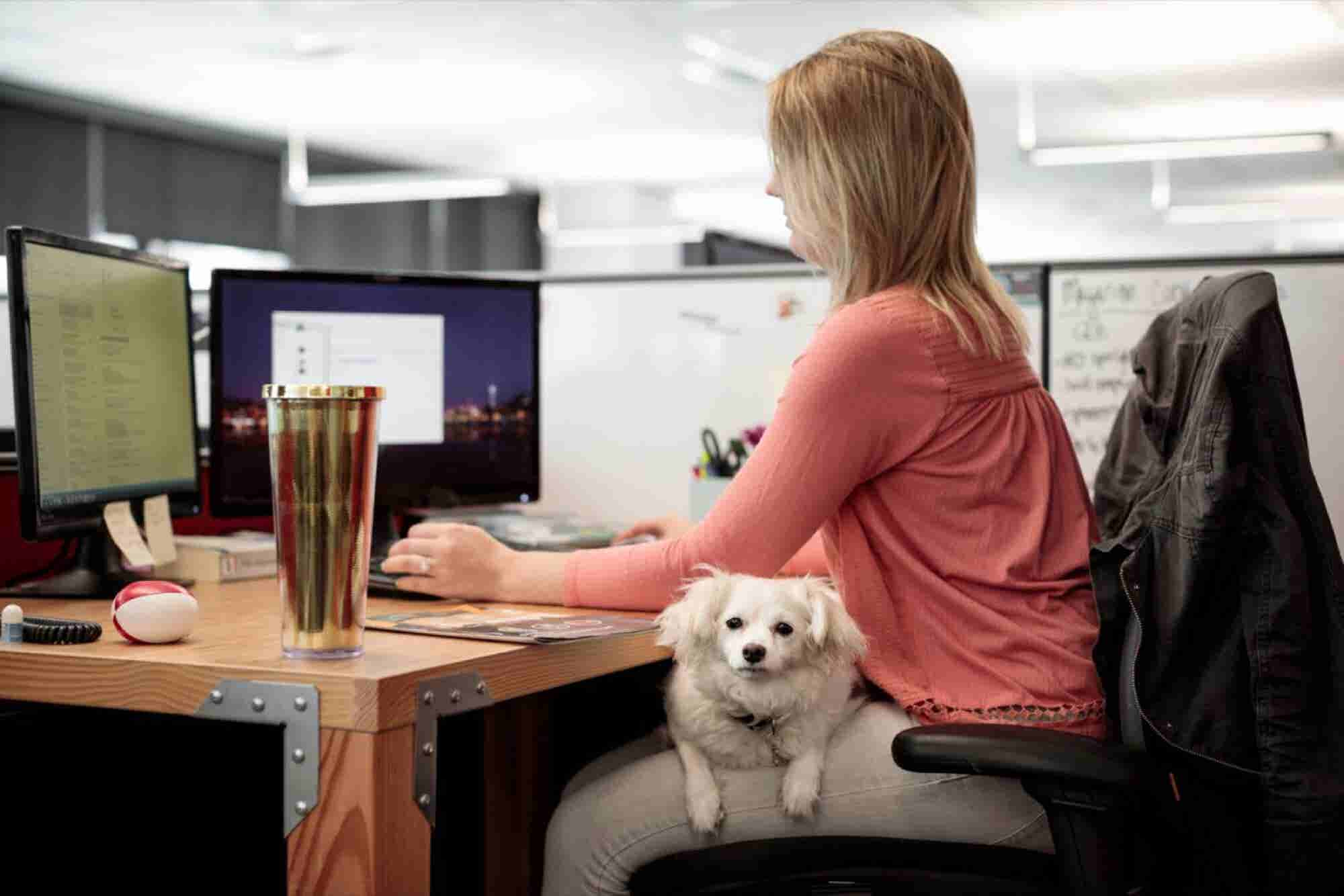 Amazon's Dog-Friendly Seattle Headquarters Is 6,000 Pups Strong