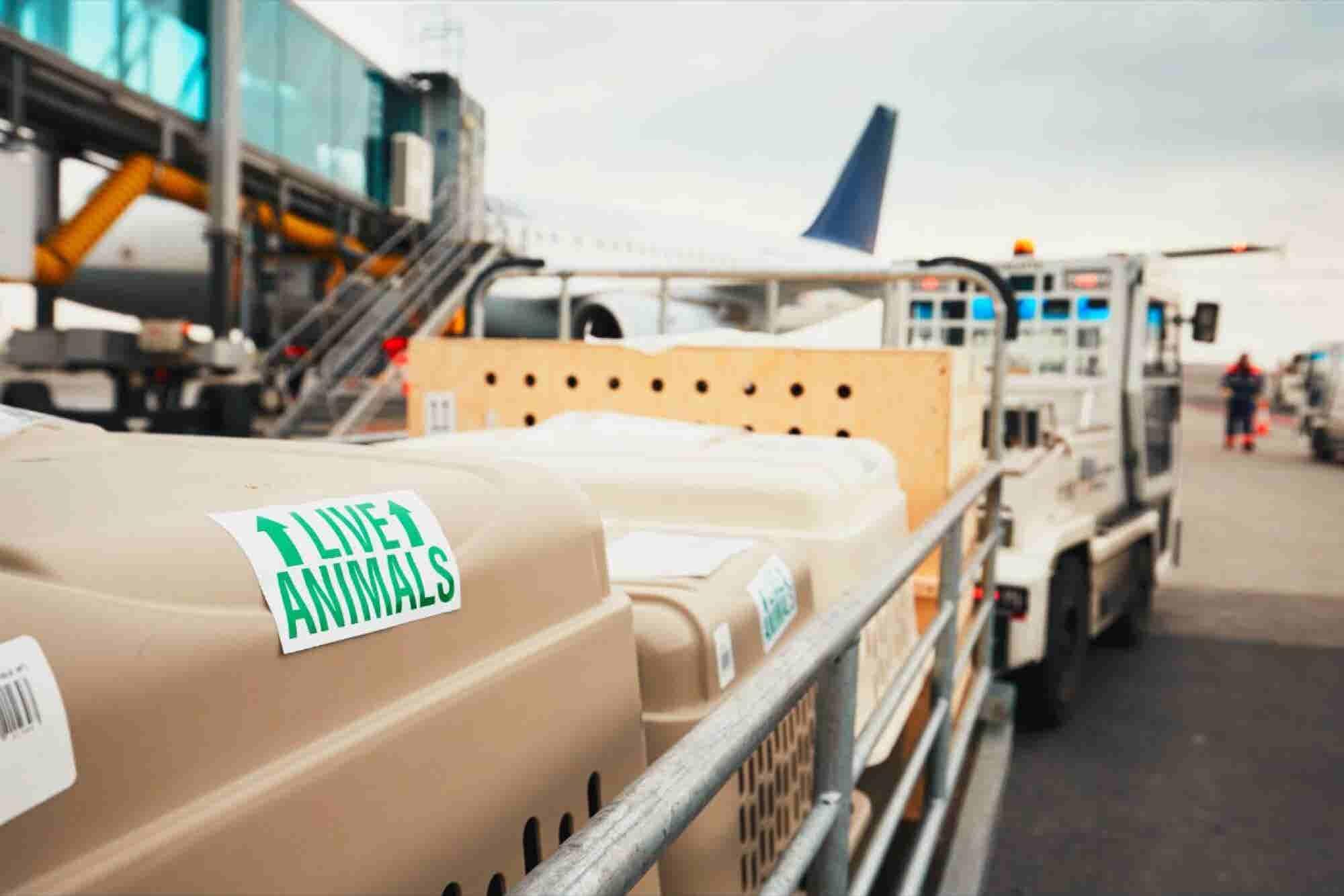 United suspenderá su programa de transporte de mascotas