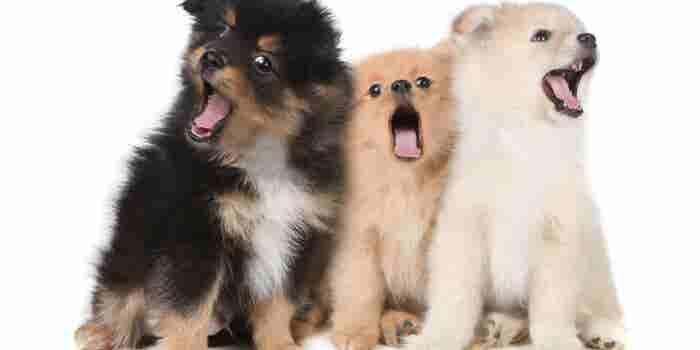 Ahora podrás interpretar los ladridos de tu perro