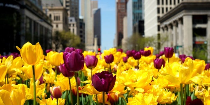 4 Springtime Strategies to Liven up Your Company Culture