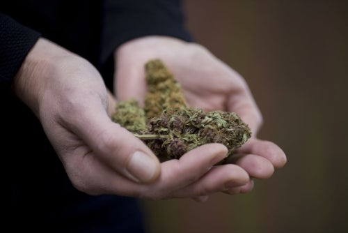 Why the Mission Statement and Business Plan for a Cannabis Business Are Unique