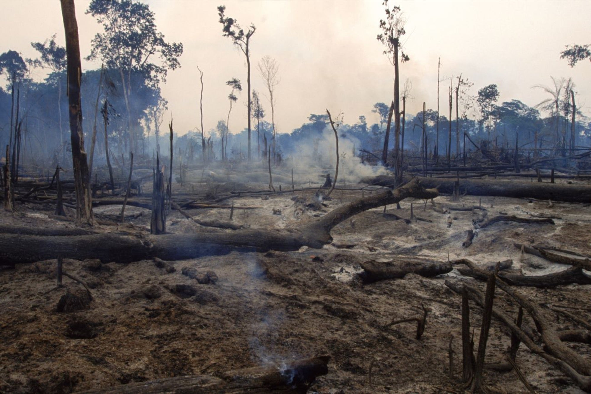 This Is Climate Change' Tells an Urgent Message Via Virtual