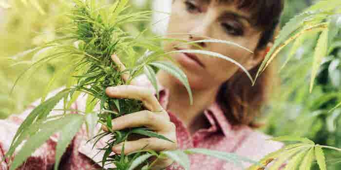 6 Ways Women Can Raise Cannabis Capital