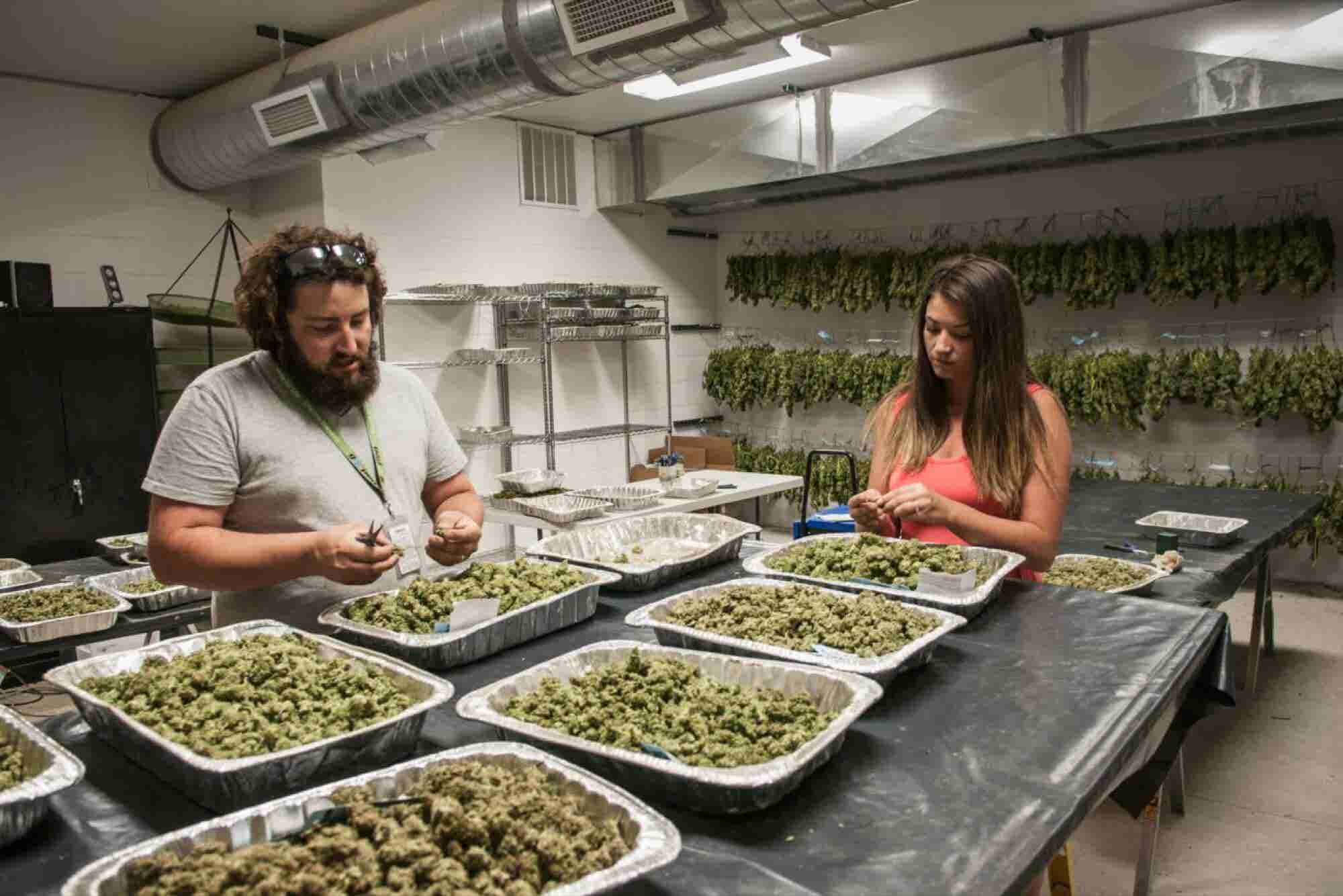 Is Your Cannabis Business Properly Licensed?