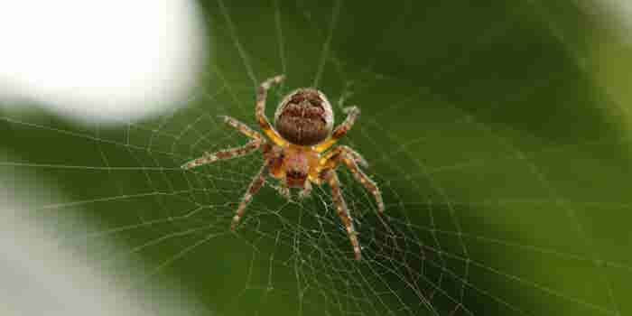 Un repartidor va más allá en el servicio al cliente: se deshace de una araña