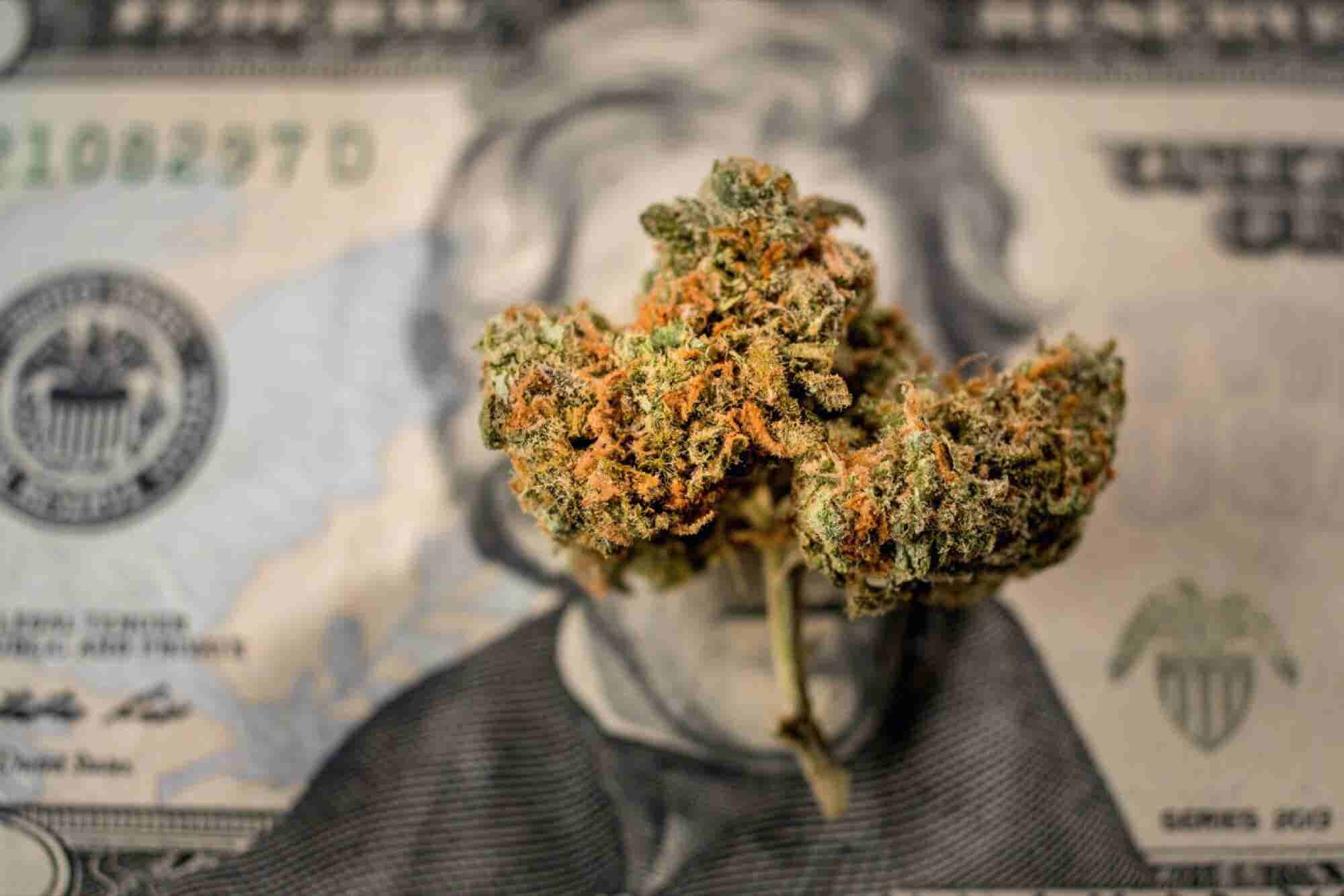 6 Lessons From Cannabis CEOs Who Raised More Than $50 Million