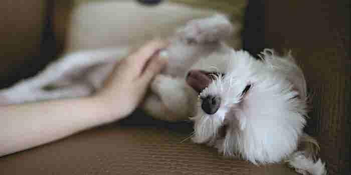 Ellas crearon el Airbnb mexicano para mascotas