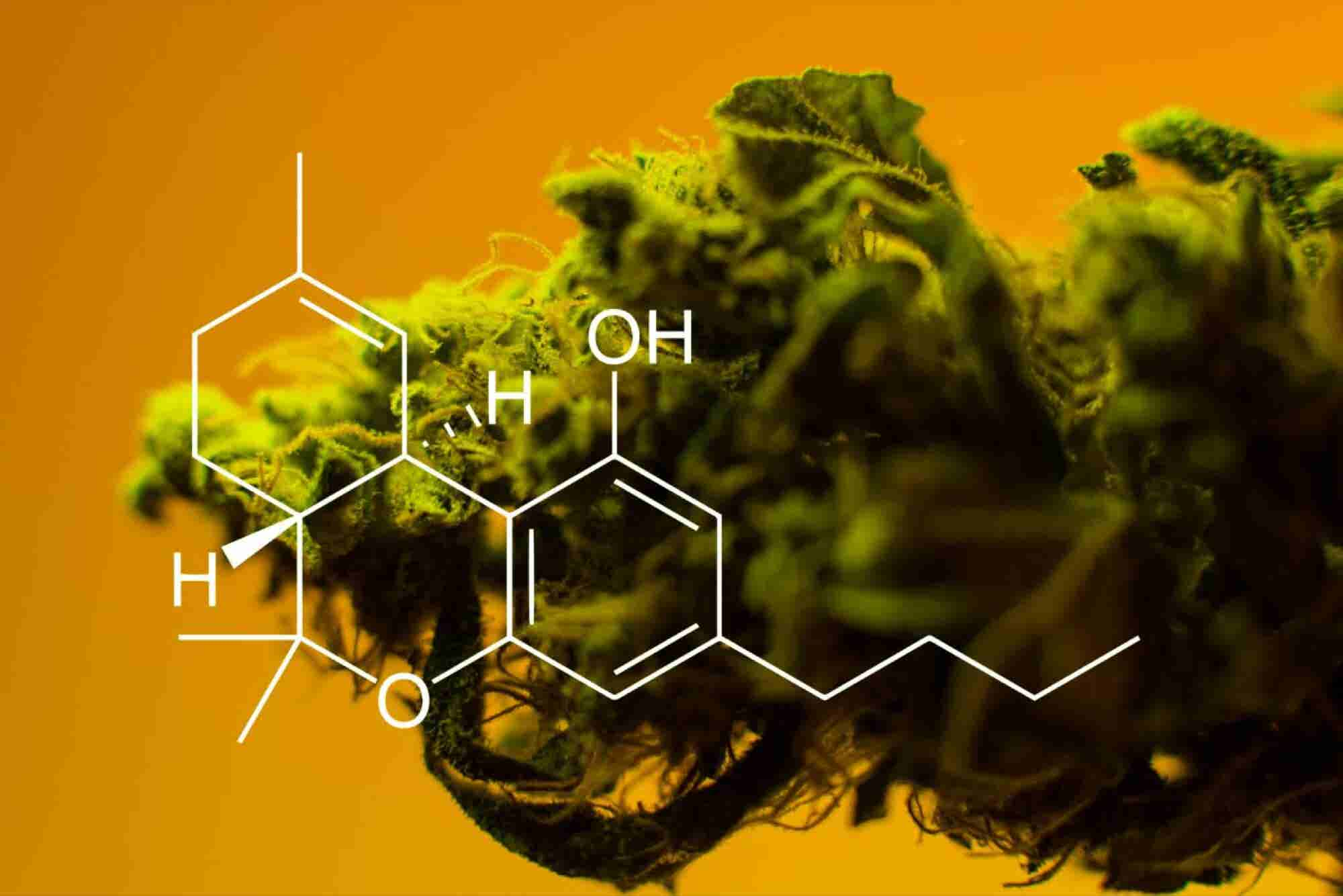 5 Things You Should Know About CBD