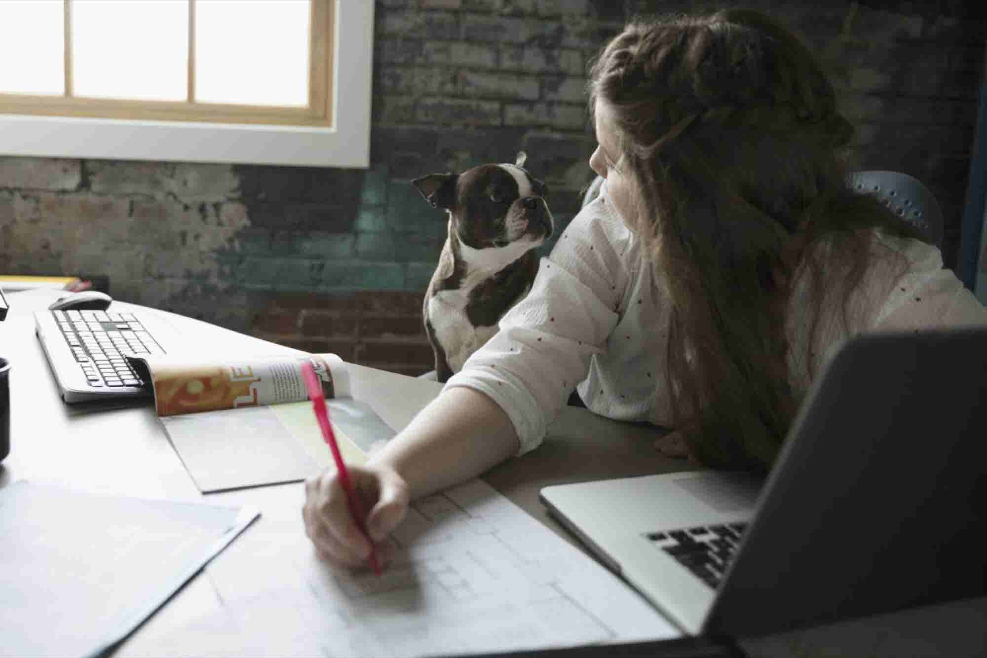 Everything You Need to Create an Amazing Dog-Friendly Office