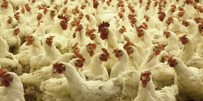 How Technology is Streamlining the Unorganised Indian Meat & Poultry Industry