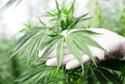 The First Marijuana-Derived Drug and a New Entry for Most Creative Com...
