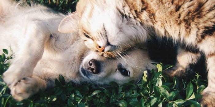 +kota compra Petsy, el ecommerce mexicano de mascotas