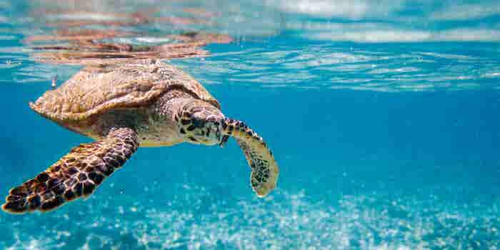 Boing cambia su empaque y ayuda a las tortugas marinas