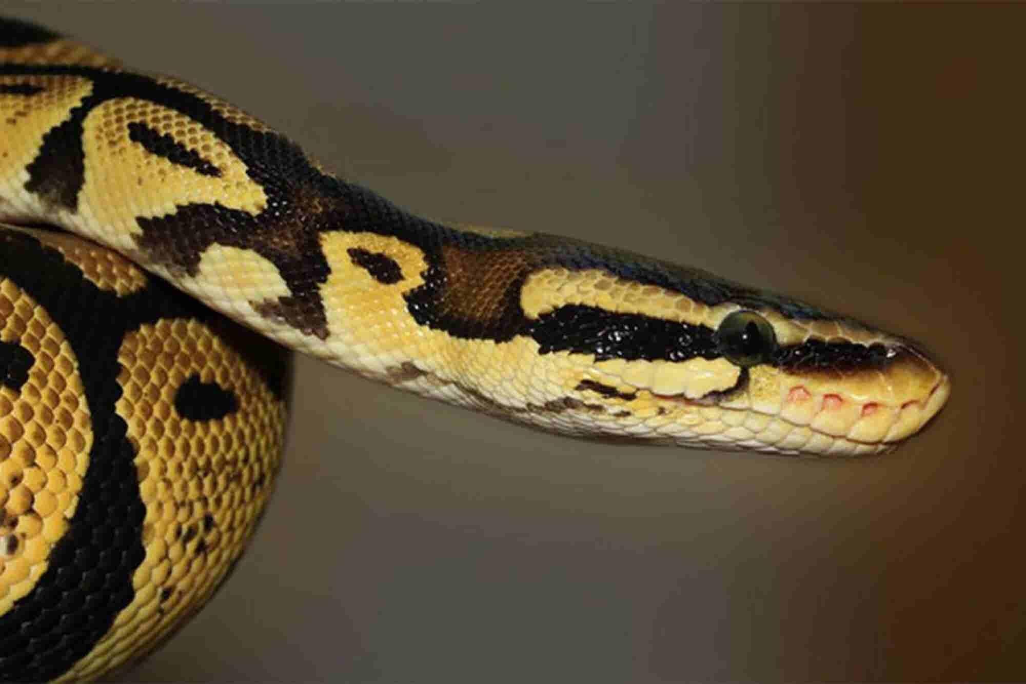 TSA Discovers Snake Inside External Hard Drive