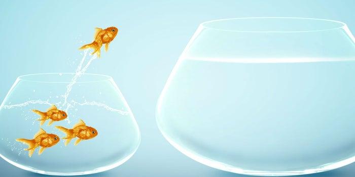 Esta es la delgada línea entre oportunidad y oportunismo