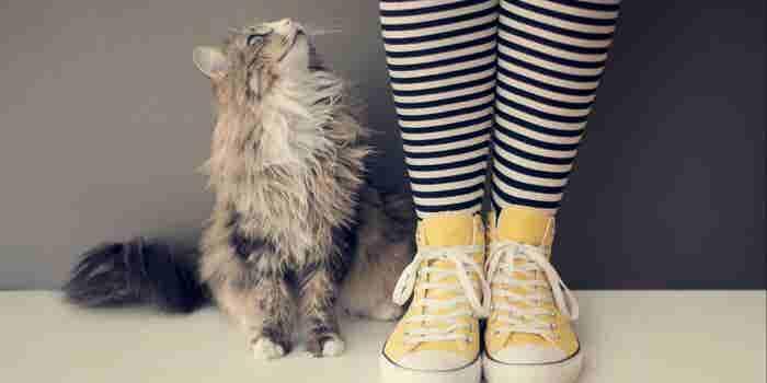 Un parásito presente en la popó de gato aumenta tus probabilidades de ser emprendedor: estudio