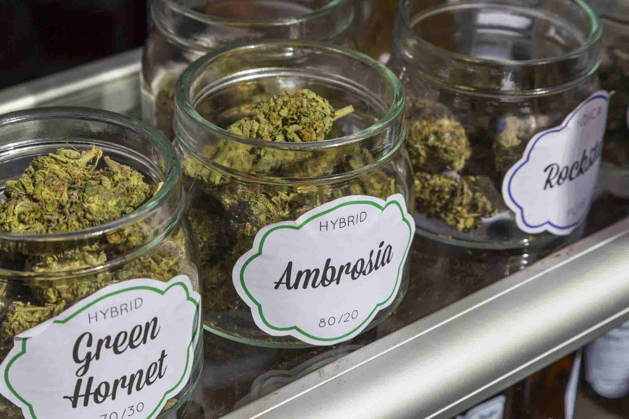 U.S. Cannabis Businesses Look Northward as Canada Opens a Vast Legal M...