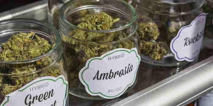 U.S. Cannabis Businesses Look Northward as Canada Opens a Vast Legal Marijuana Market