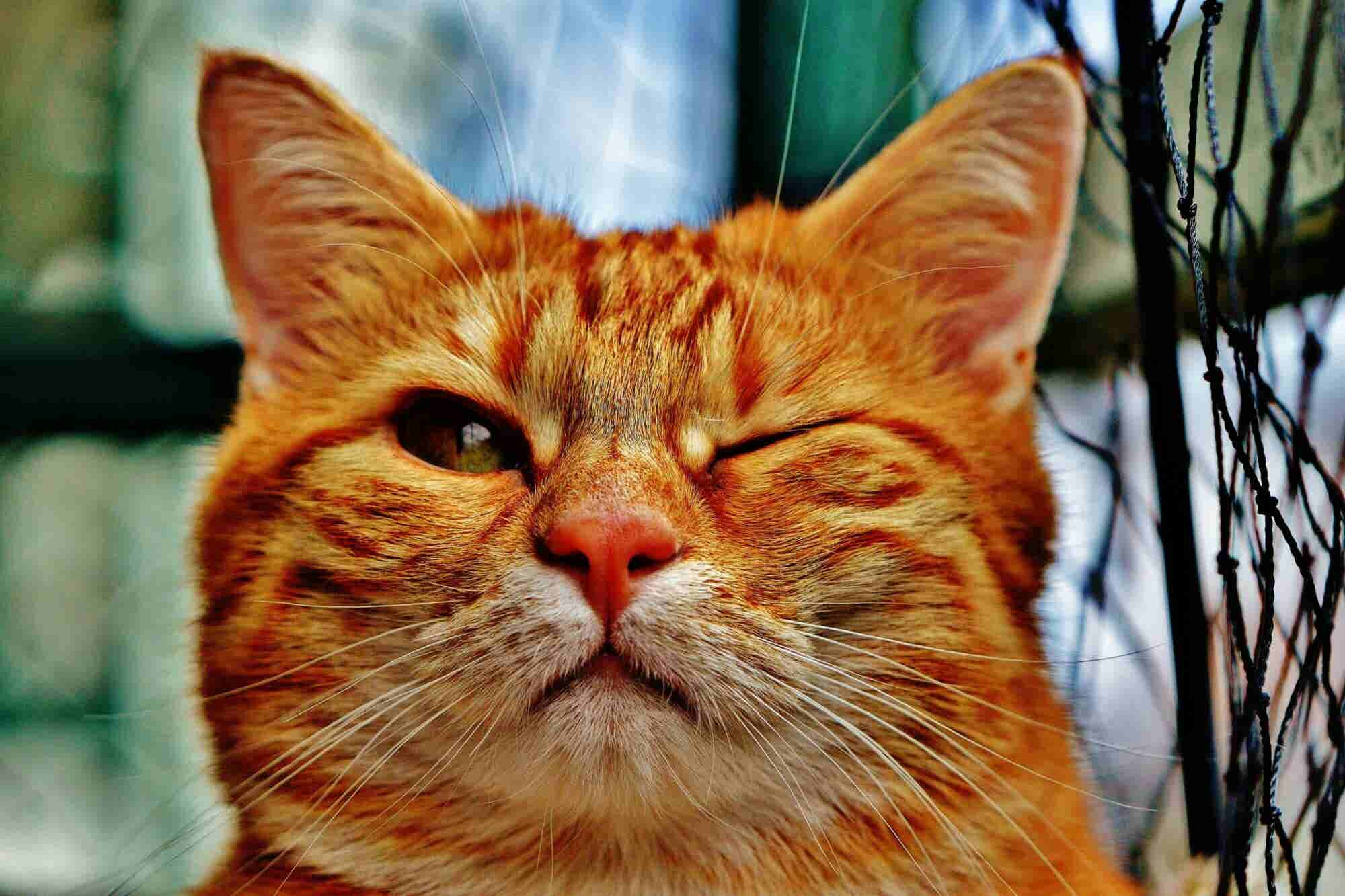 Want to Be an Entrepreneur? This Cat Parasite Might Help You