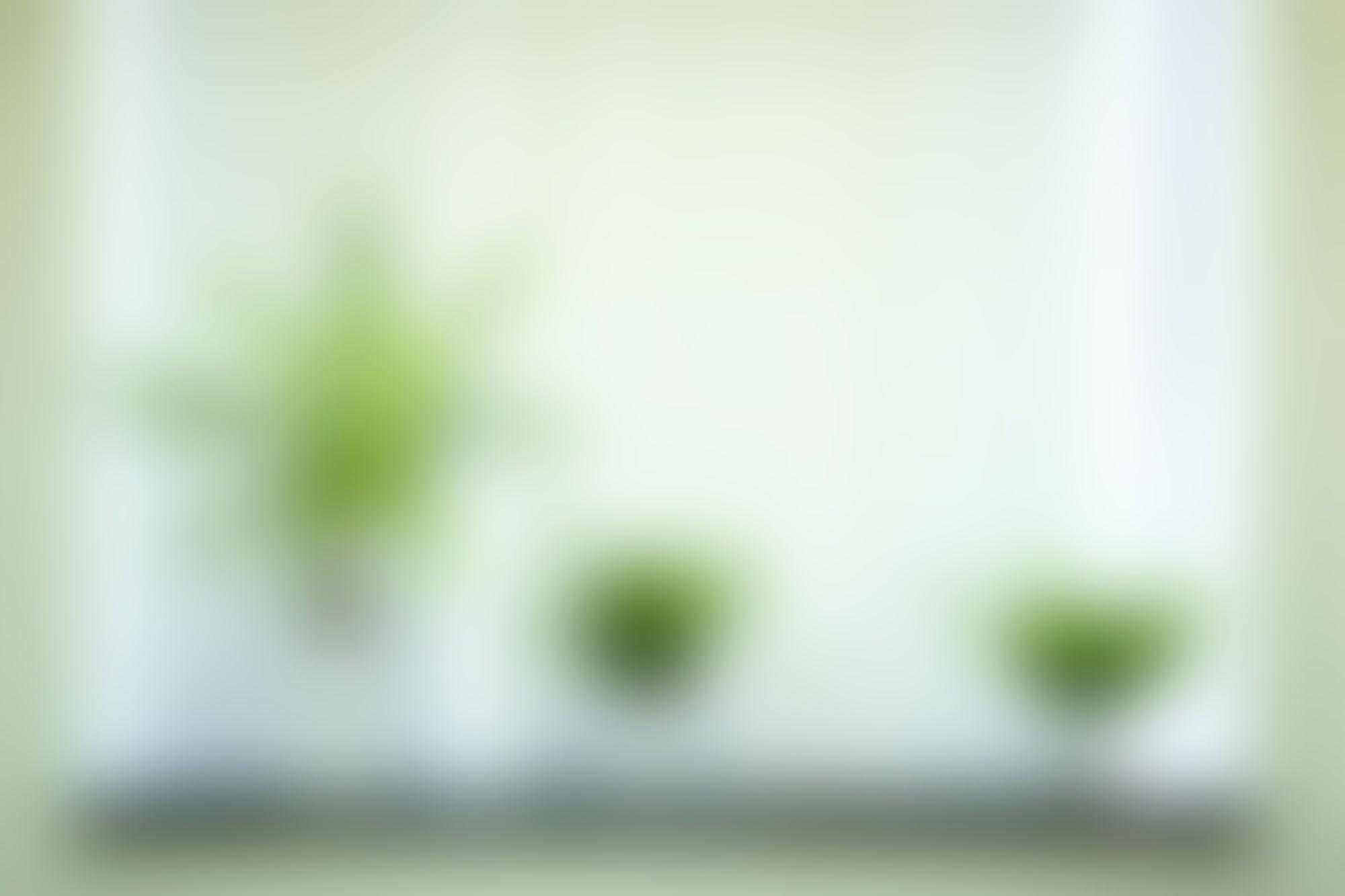 Infografía: 5 plantas que puedes tener en tu oficina
