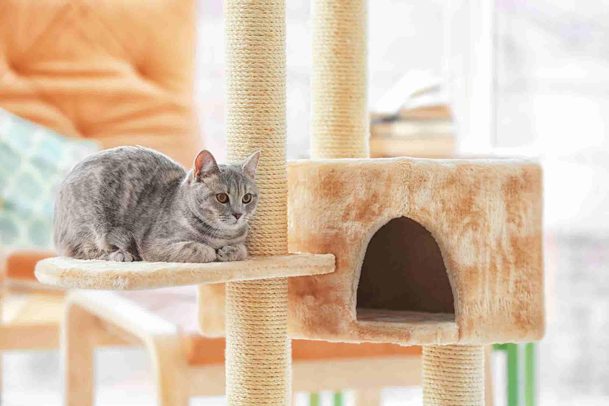 Emprende con mobiliario para gatos