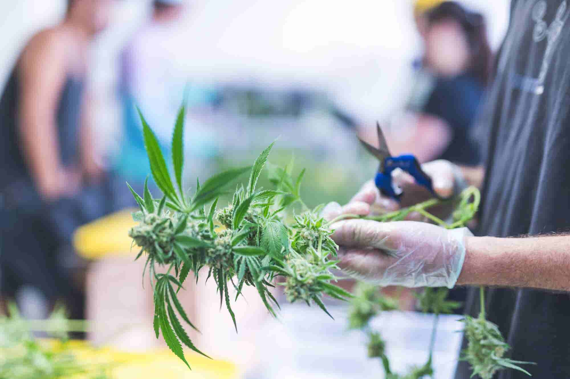5 Reasons Why Diversity, Equity and Inclusion Are Essential in the Cannabis Industry Business