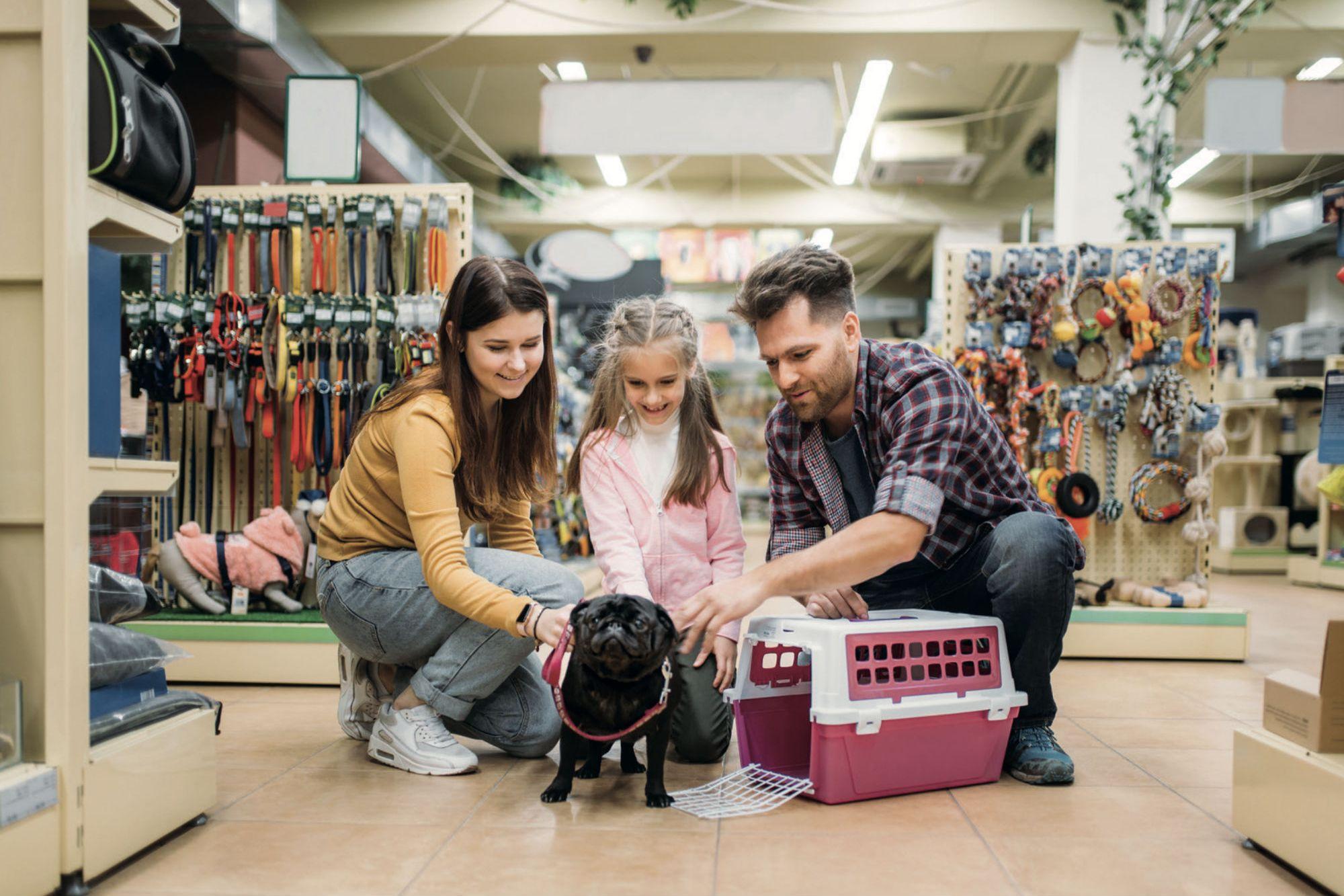 816cdde078 Lo que necesitas saber para abrir una tienda  todo para tu perro
