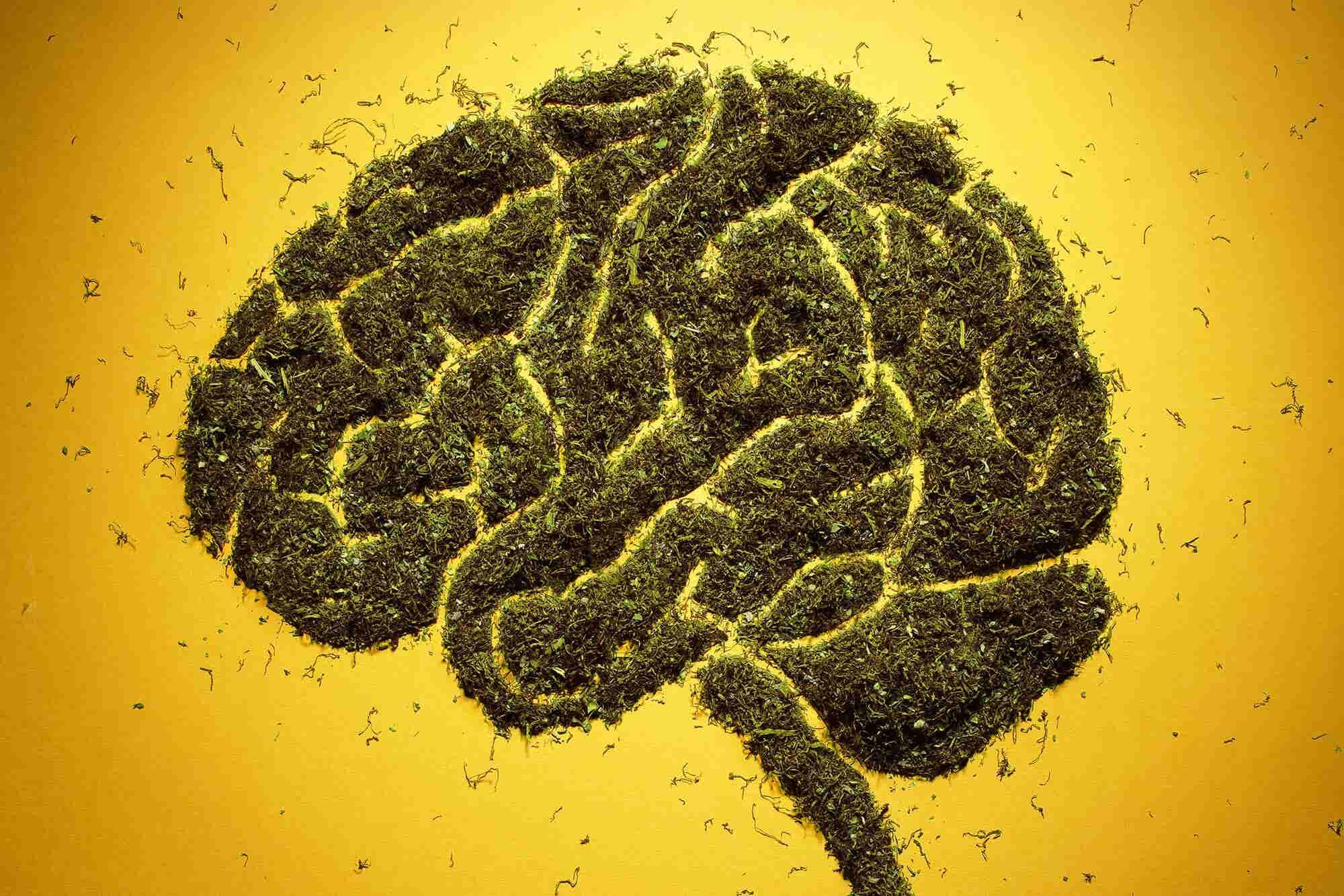 New Study Will Gauge Pot's Effect on Teenage Brains