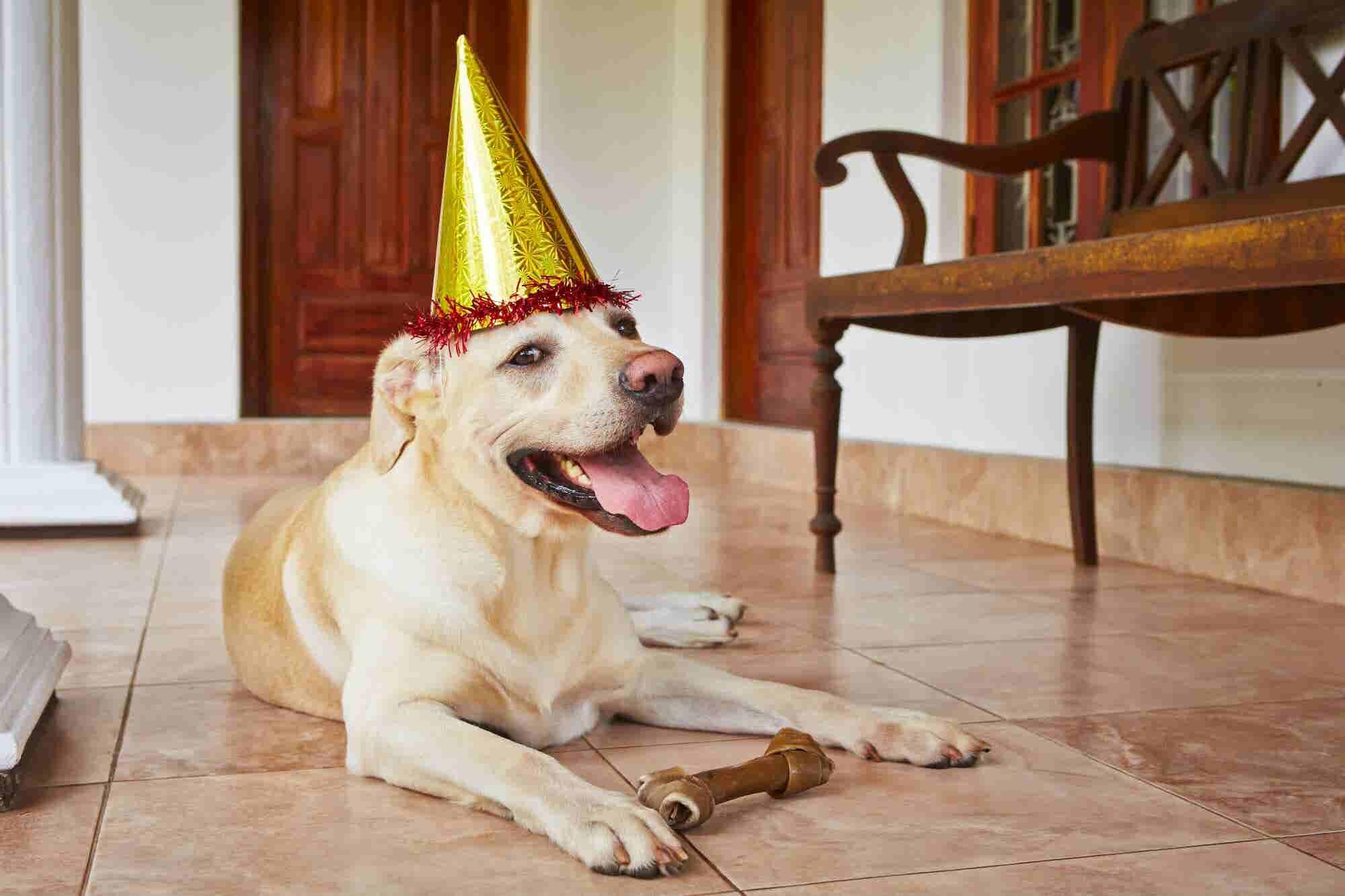 ¿Qué edad tiene mi mascota en años humanos? Un veterinario lo explica