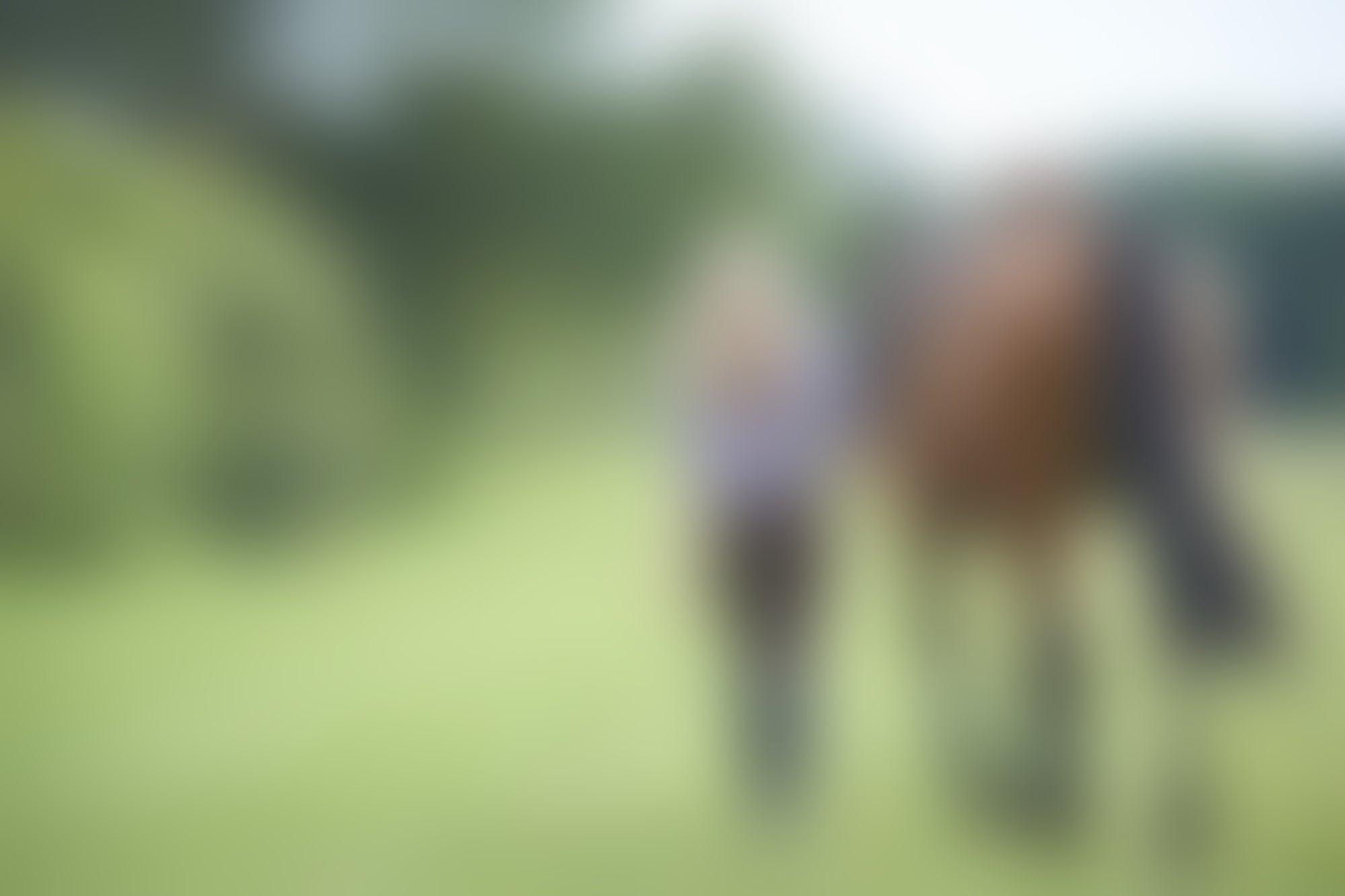 3 Leadership Lessons I Learned Training Horses