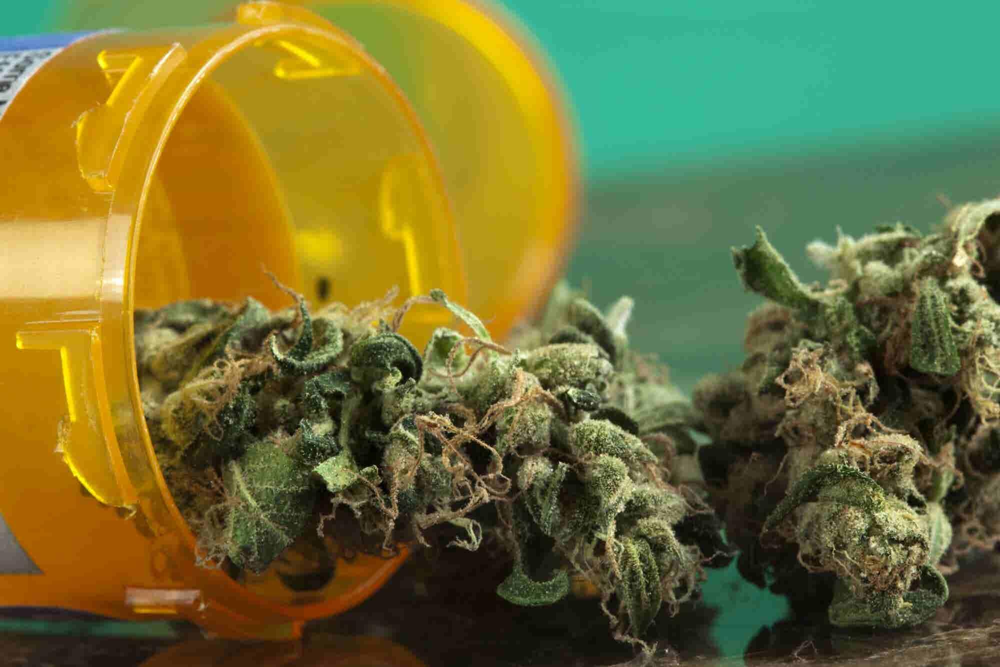 A Plea to Our Elders: Consider Medical Marijuana Before Opioids