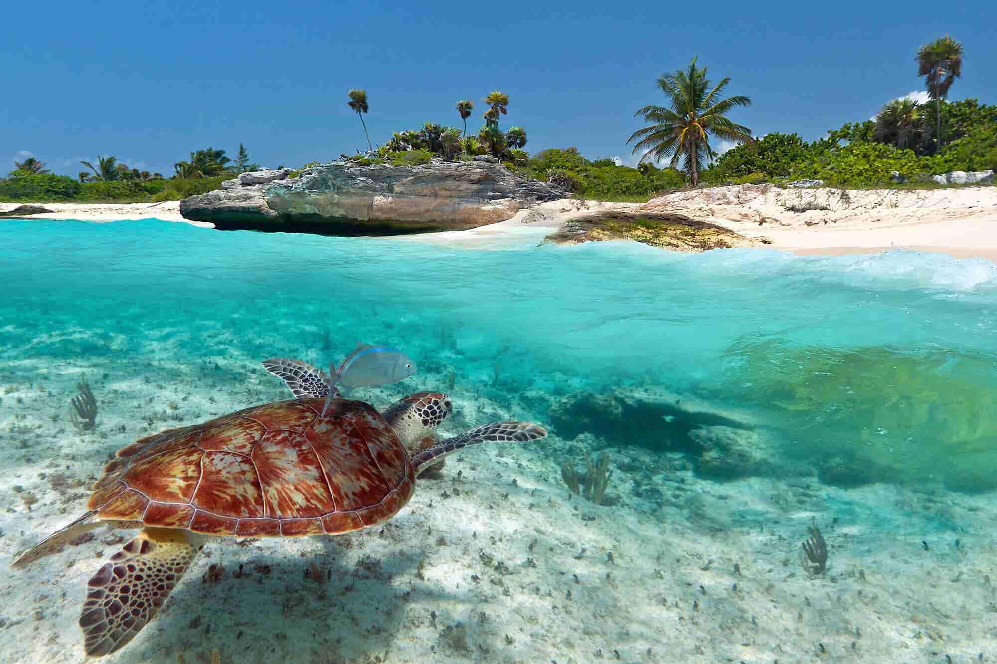 Viaja por las mejores playas de México y gana 185 mil pesos