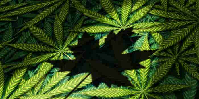 7 Interesting Things to Know About Canada's Legalization of Marijuana