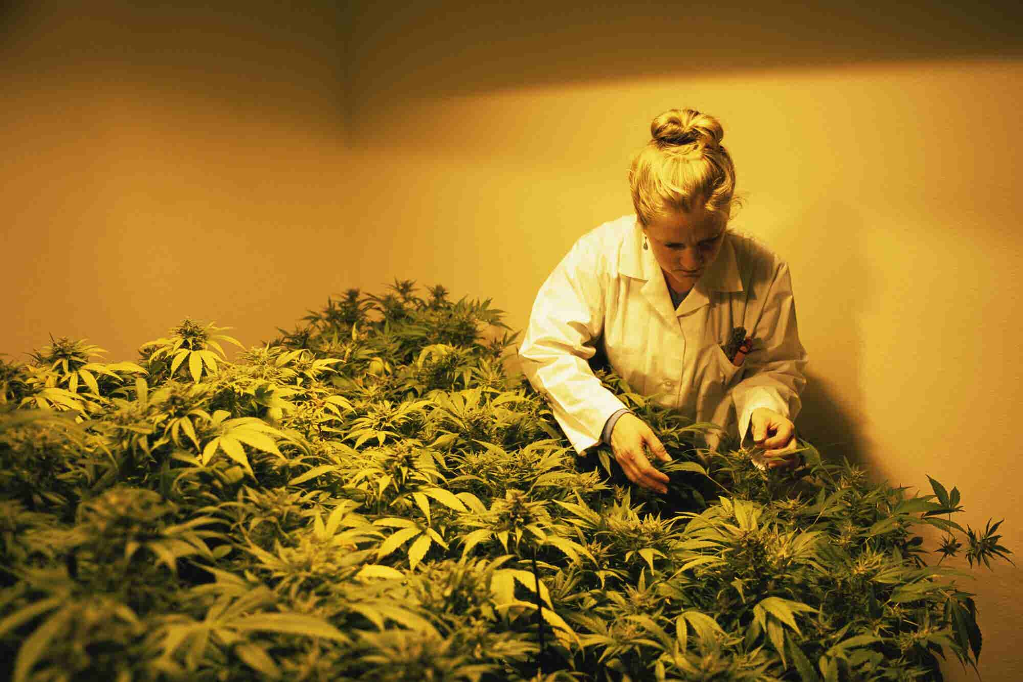 Marijuana Research Could Get A Boost With New Bill