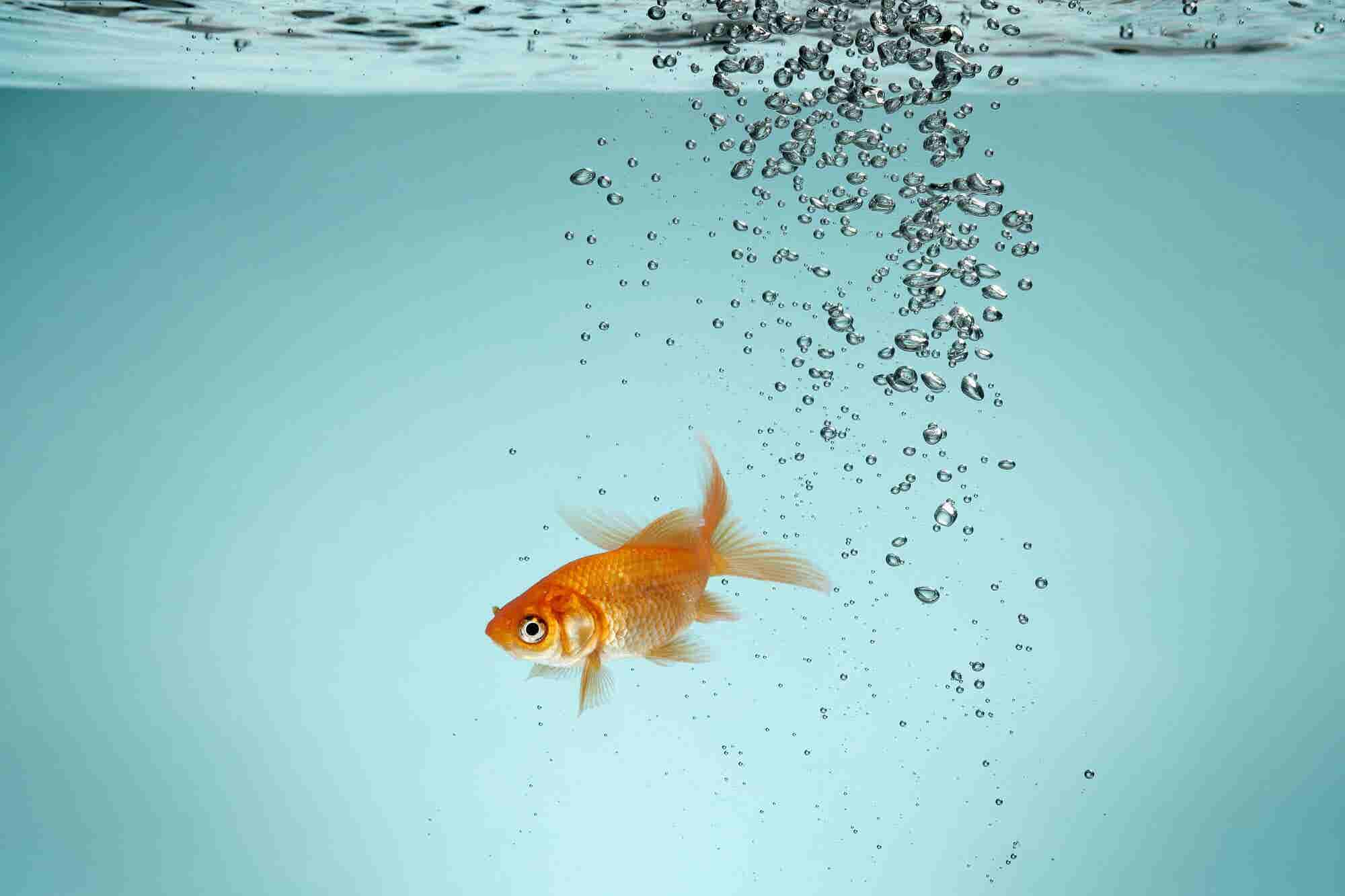 Sorry, Goldfish: People's Attention Spans Aren't Shrinking, They're Evolving