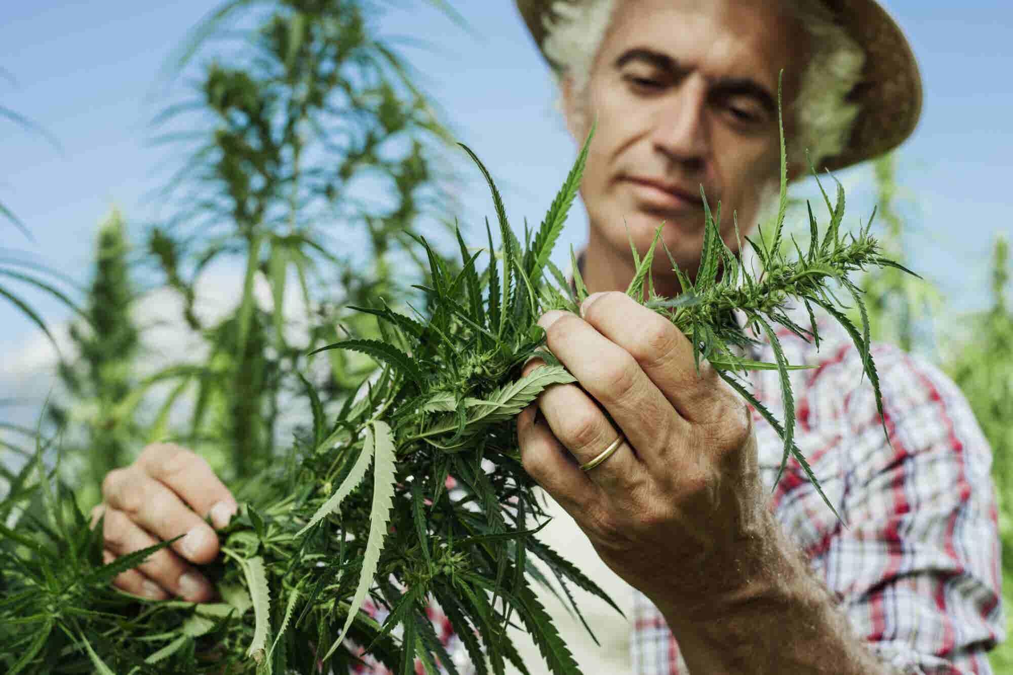 5 Essential Characterics of a Cannabis Entrepreneur