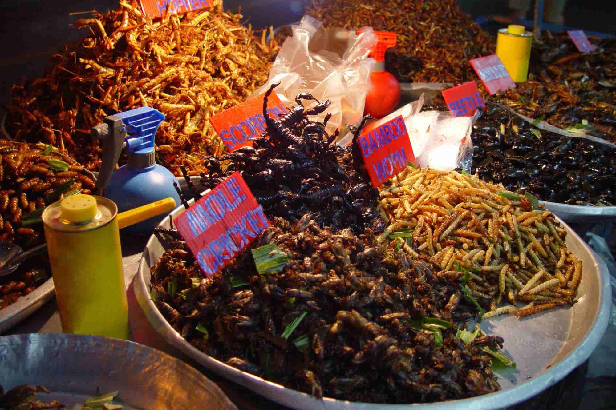 ¿Los insectos nos salvarán del hambre mundial?